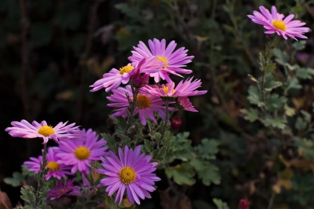 Цветы в тени