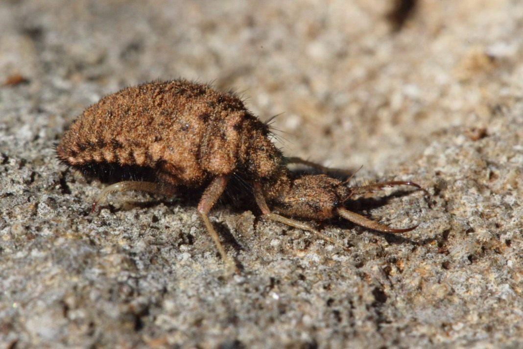 муравьиный лев фото и описание неподдельными срежессированными чувствами