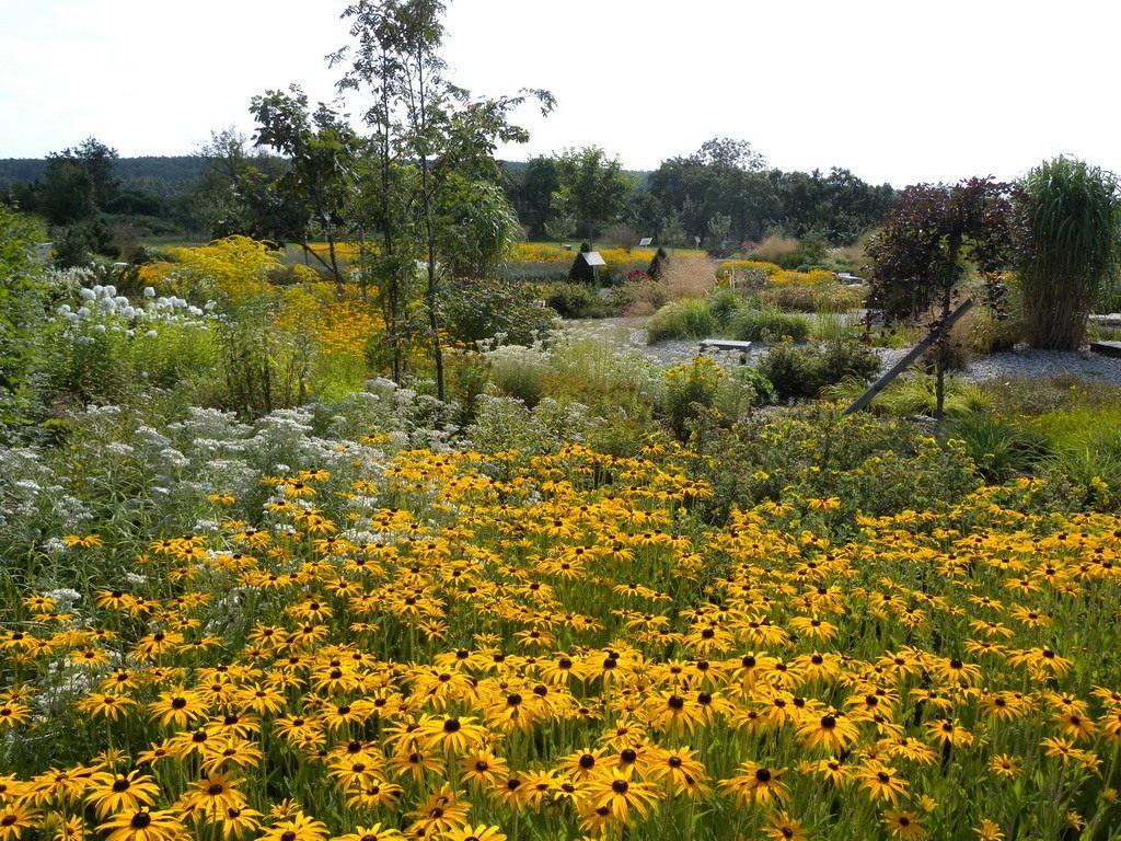 Сорняки на огороде: названия и фото