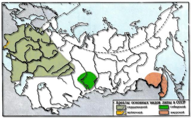 Карта ареалов основных видов липы на территории бывшего СССР