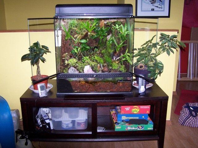 Искусственная подсветка комнатных растений