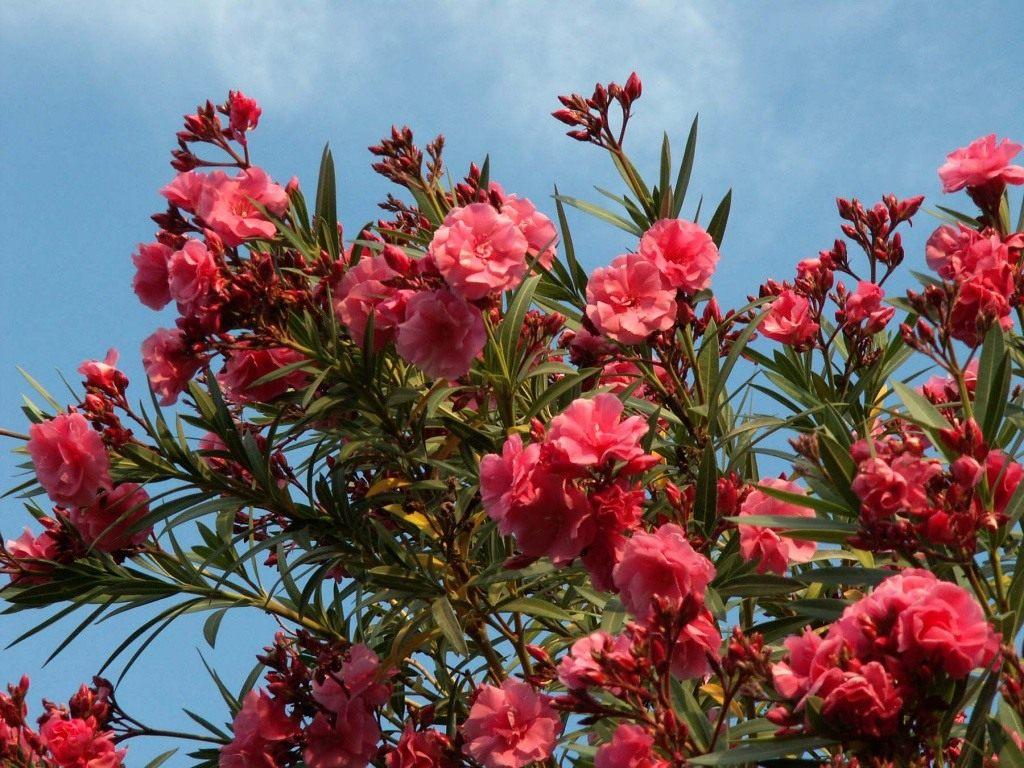 профессиональных цветы растущие в сочи фото один маленький штрих