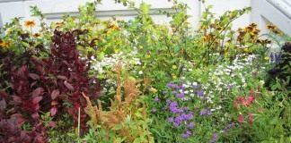 Цветники, особенности участка и подбор растений