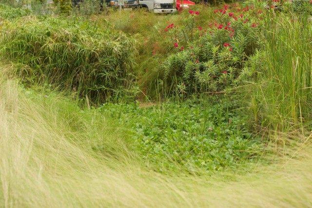 Загущенная посадка растений на участке