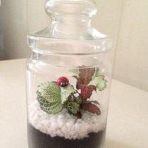 Сад в сосуде, флорариум