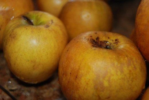 Квашенные яблоки