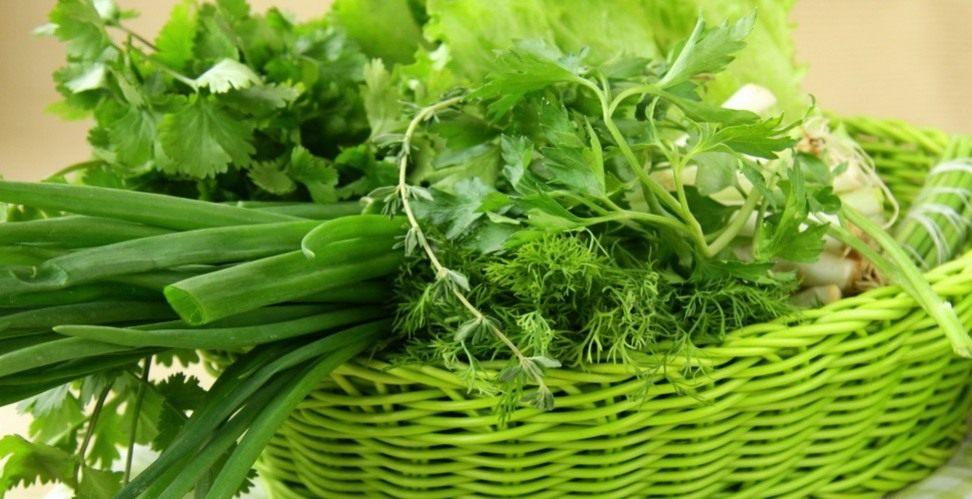 Салат зеленеющий на грядке