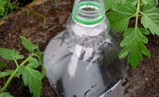 Полив при помощи пластиковой бутылки