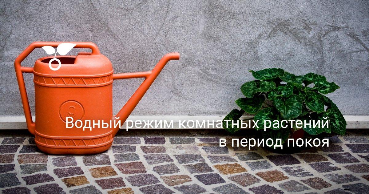 тема водный режим полив растений