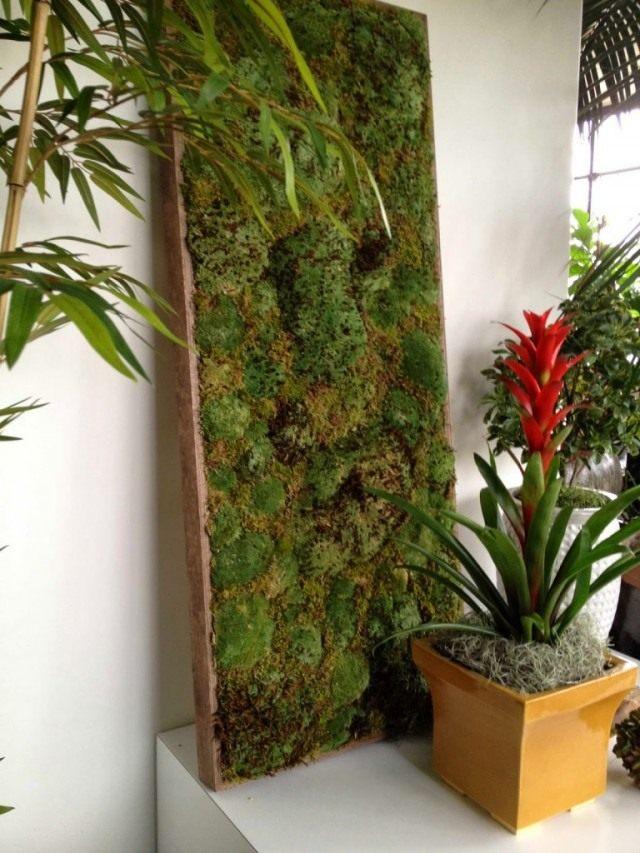 Декоративная живая панель из мха
