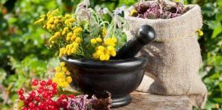 Арома-грядка с полезными травами