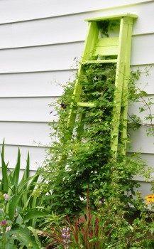 Стремянка как опора для вьющихся растений