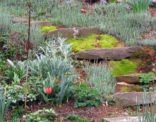 Небольшие ступени декорированы мхом а по краям