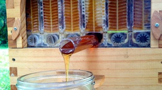 Мёд стекает из ячейки