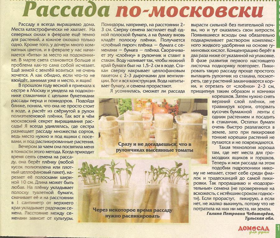 rassada-v-pelenkakh-02