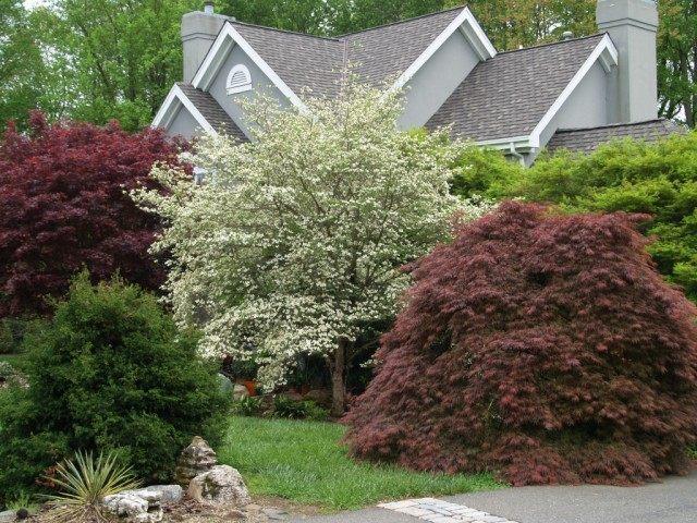 Деревья и кустарники в дизайне сада