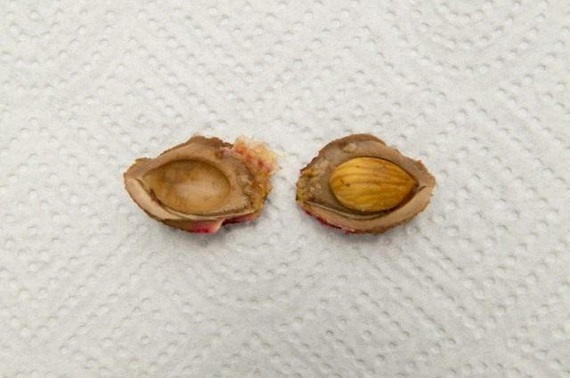 Косточка и семя персика
