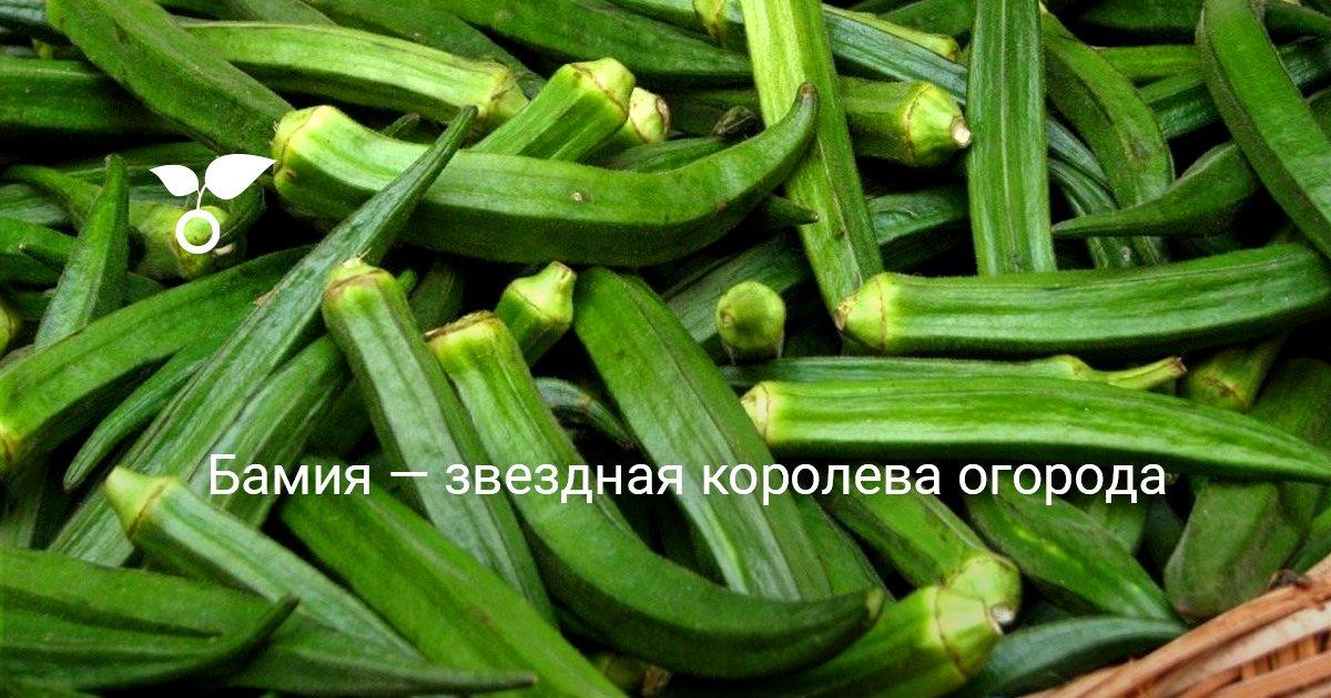 Семена окры