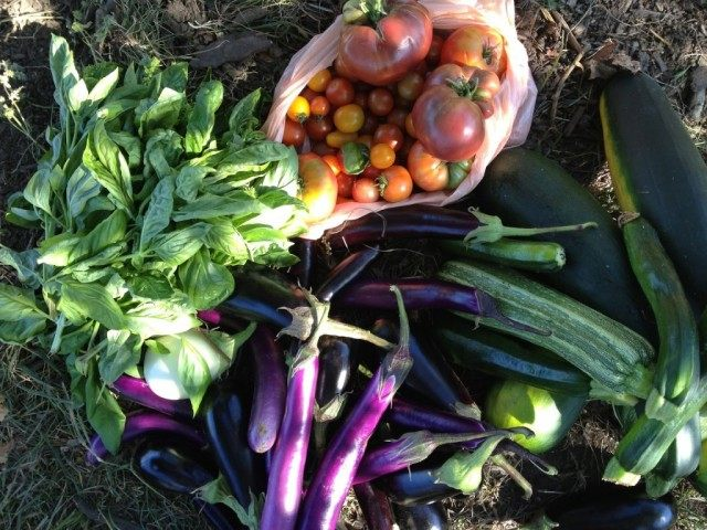 Осенний урожай овощей