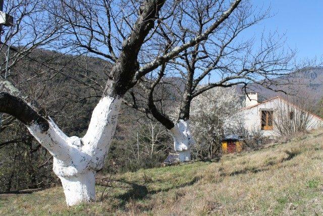 Белим стволы деревьев