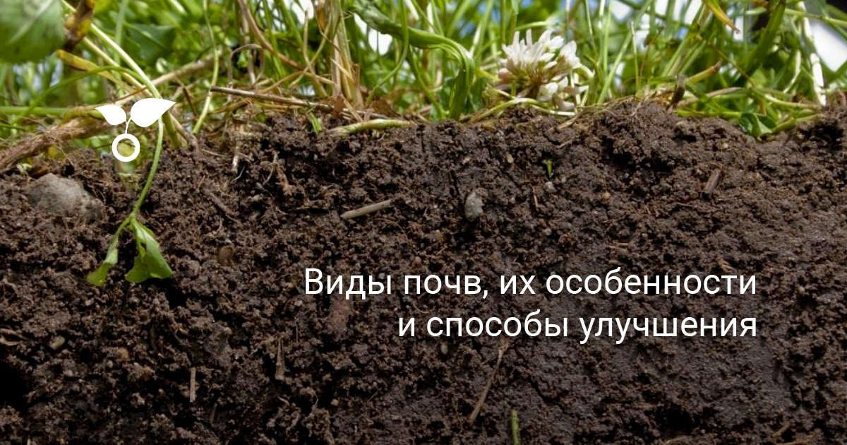 Илистая почва