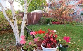 Позаботьтесь о горшечных растениях в саду