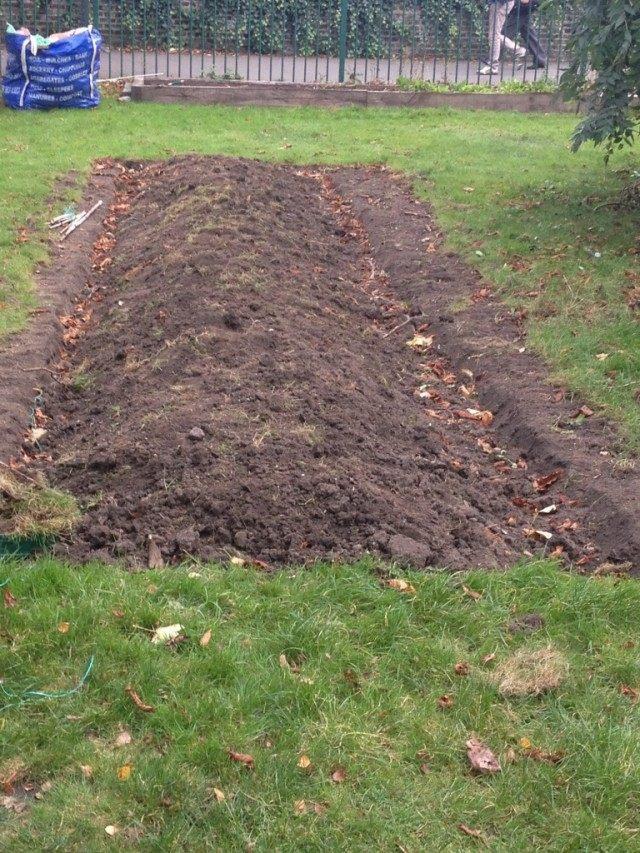 Очищаем участок от мусора. Закладываем его в компост, или теплые грядки