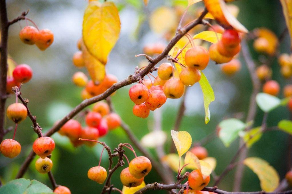 Осень в саду: готовимся к следующему сезону. Подготовка ...