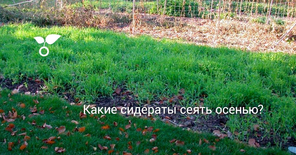 Сидераты: какие лучше для огорода. Посадка весной, летом, осенью. Лучшие сидераты для картофеля