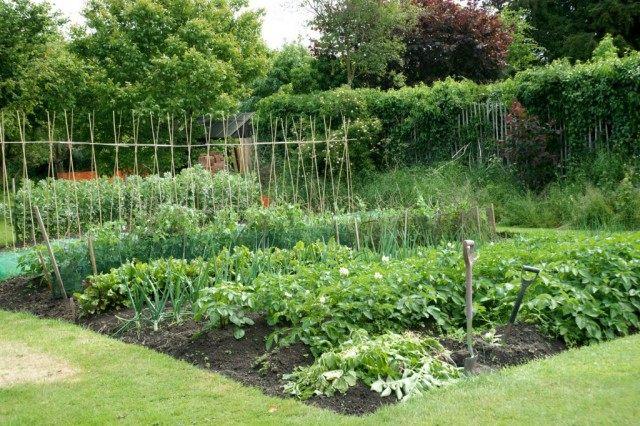 Грядки с овощными культурами