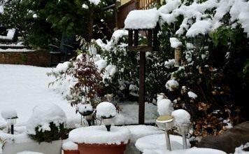 В декабре также необходимо тщательно следить за декоративными растениями и территорией