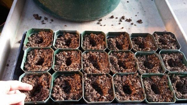 Начинаем подготовку к выращиванию рассады