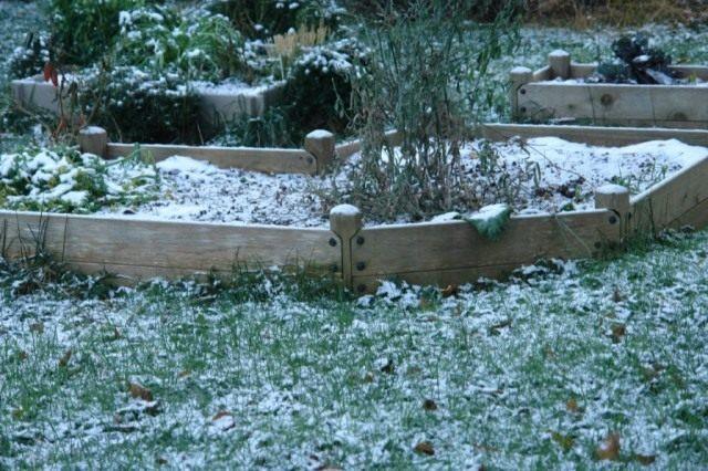 Первый снег на грядках