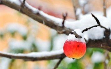 Первый снег в саду