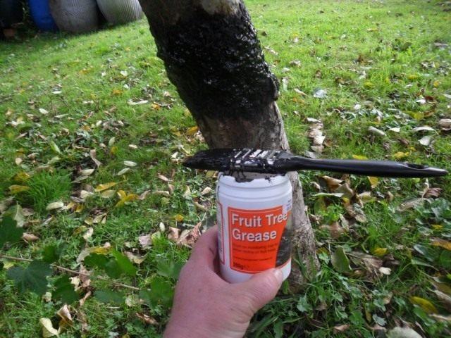 Клейкая смесь для защиты деревьев от насекомых вредителей