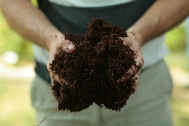 Субстрат из кокосового волокна также поможет улучшить структуру почвы