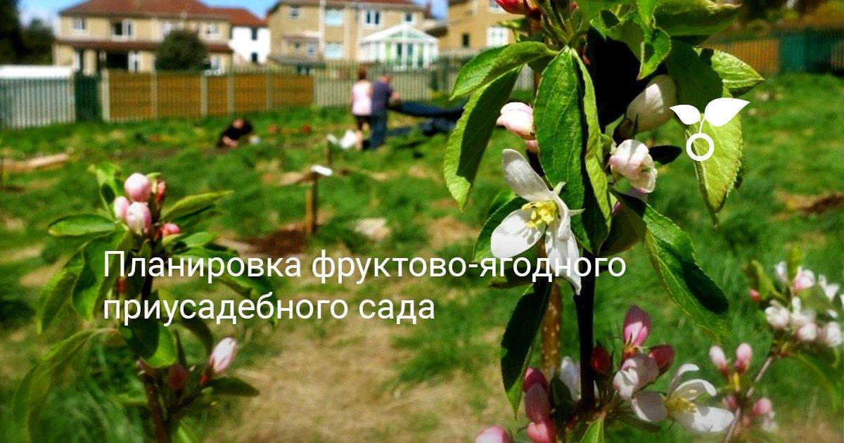 Как правильно разместить плодовые деревья на участке