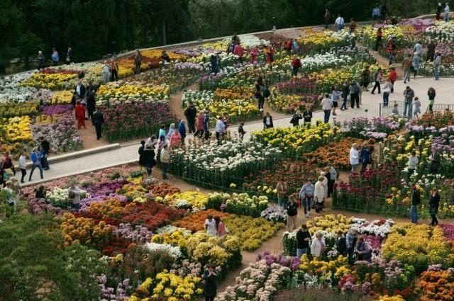 Фотография с «Бала хризантем» в Никитском ботаническом саду