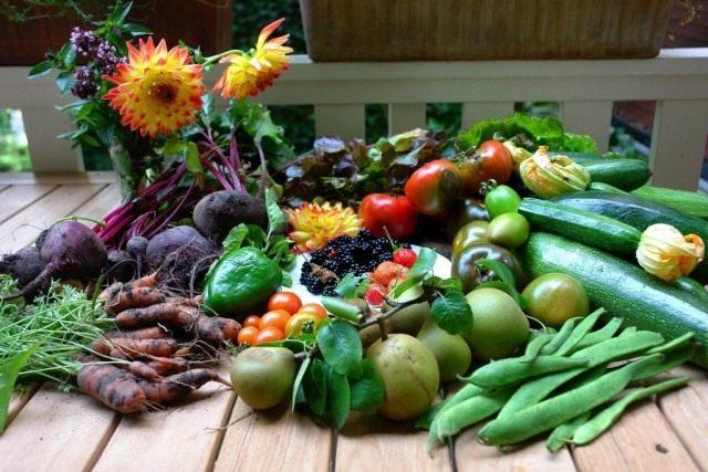 ЭМ-препараты улучшают рост и развитие растений, увеличивают их урожайность и качество выращенной продукции