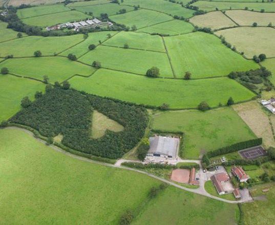 heart-shaped-meadow-2