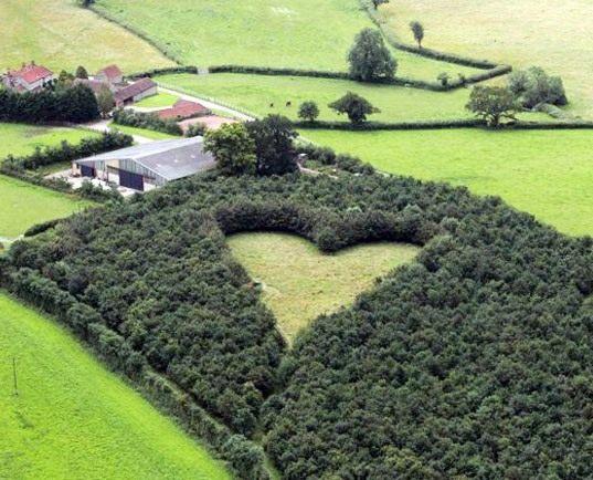 heart-shaped-meadow-lead