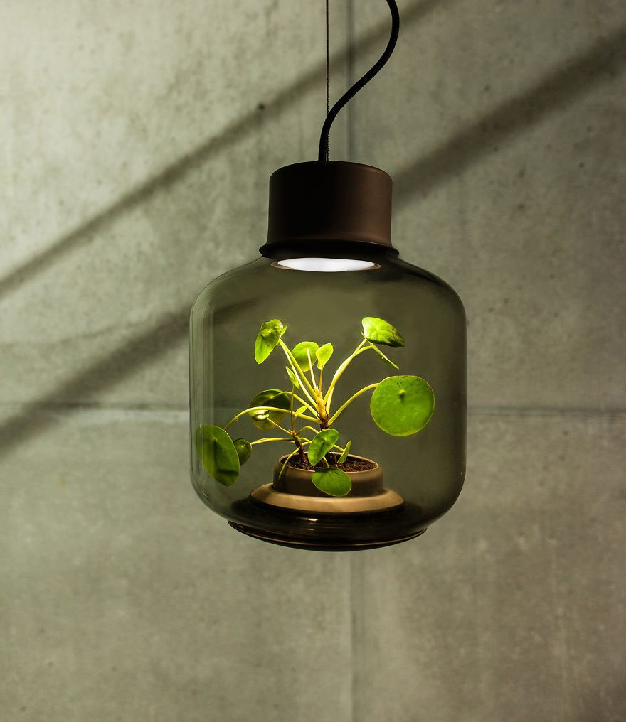 we-designed-these-lamps-to-grow-plants-in-windowless-spaces-2