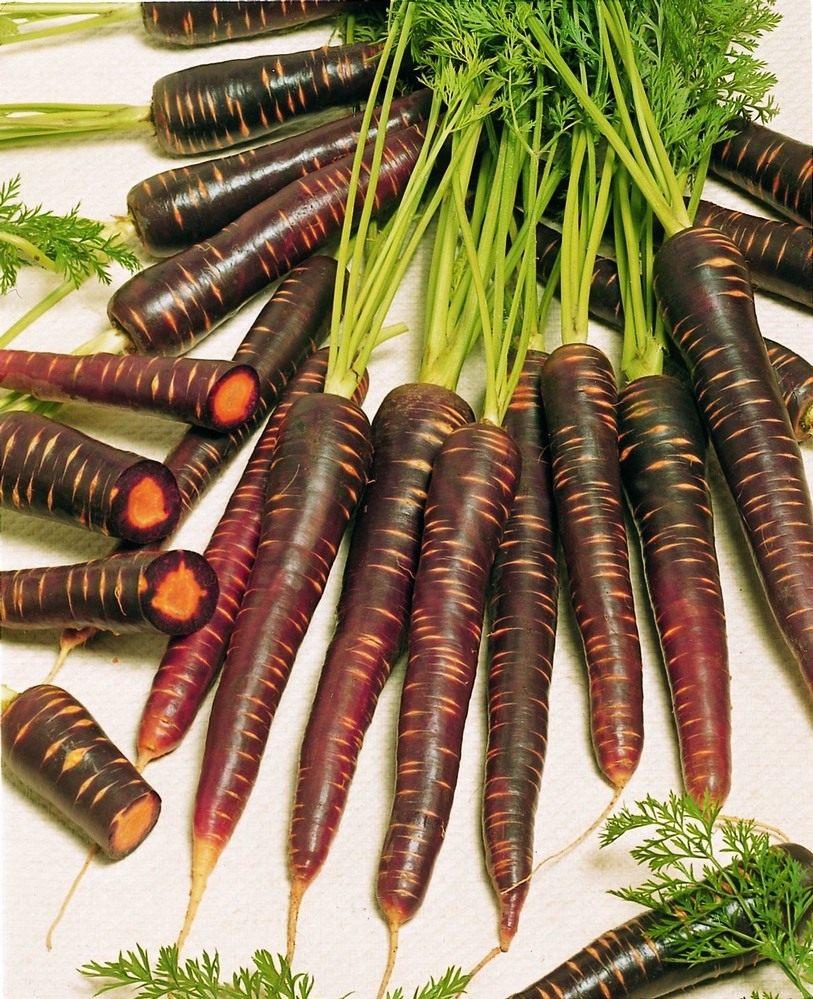 Carrot-Purple-Haze-2