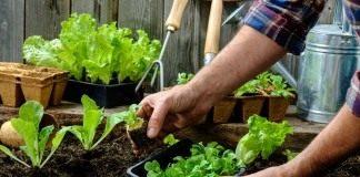 Высаживаем рассады овощных культур