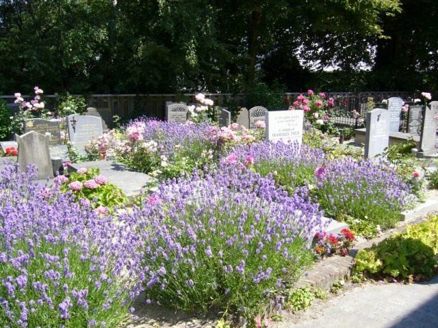 Многолетние цветы на кладбище