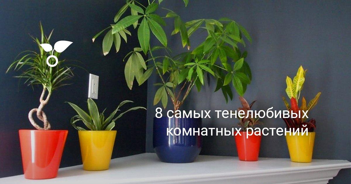 Комнатные растения для тенистых мест
