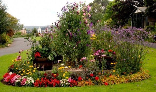 Цветочная клумба с долгоцветущими однолетними и многолетними растениями