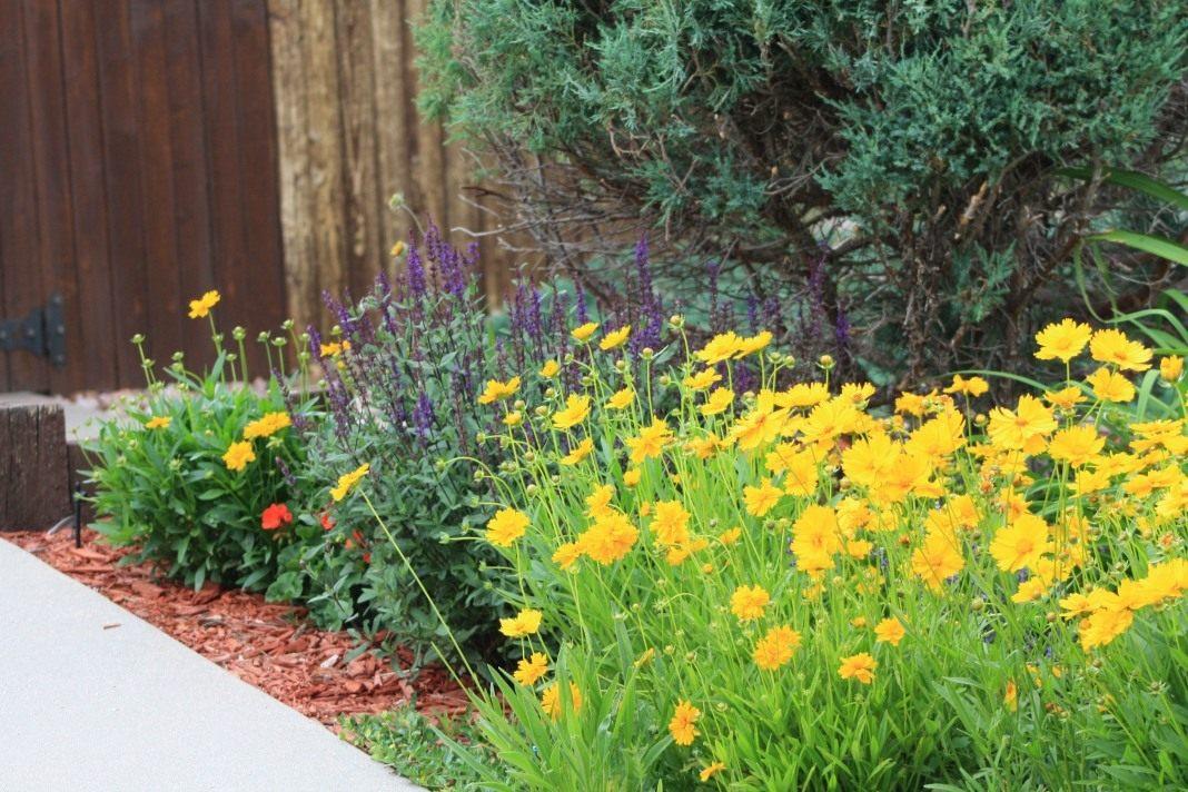 Желтые цветы с весны до осени: 50+ видов цветов для цветника ...   712x1068