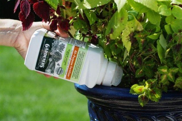 Внесение гранулированного долгодействующего удобрения для комнатных растений