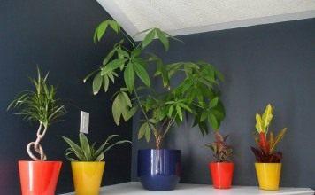 Растения в глубине комнаты